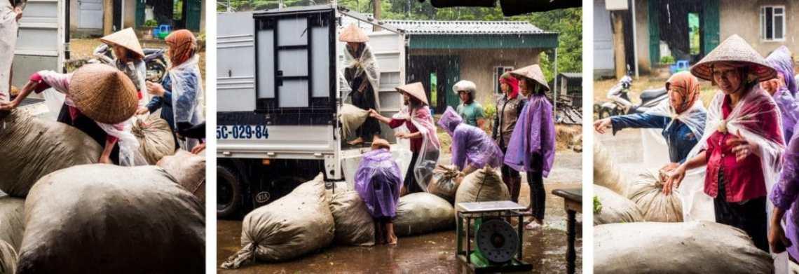 vietnam, ethnies minoritaire, thé vert, tan uyen