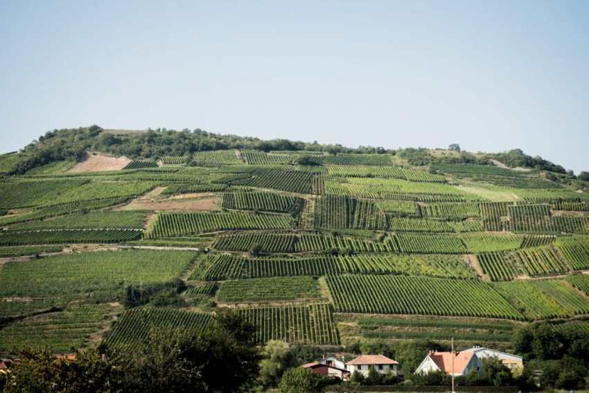 alsace, vosges, route des vins, vignobles