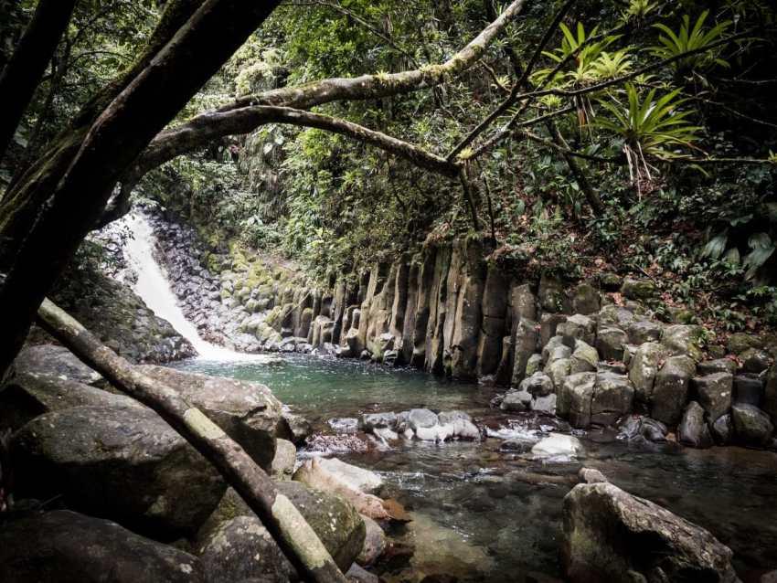 jungle, cascade paradis, fougère, forêt tropicale, guadeloupe
