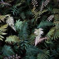 Un joyau émeraude se niche dans la forêt tropicale : la cascade Paradis