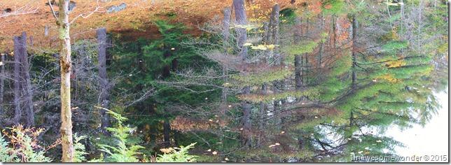 Still water reflection