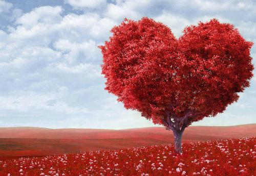 Trái tim được xem là biểu tượng của tình yêu.