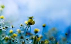 41.Yellow Petals