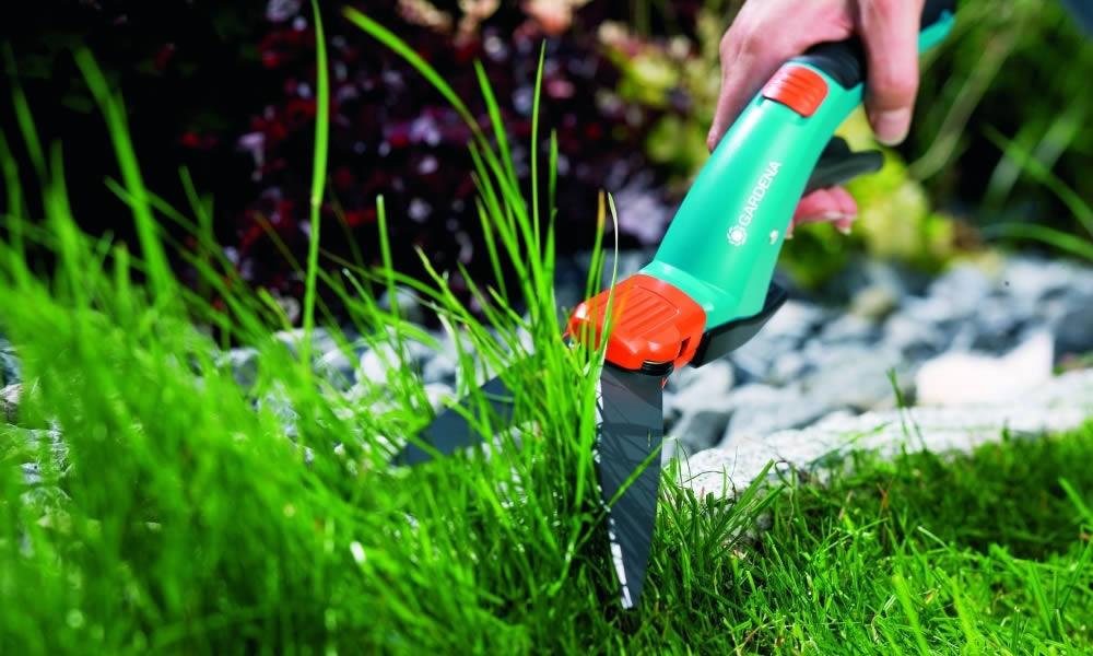 Через какое время всходит газонная трава
