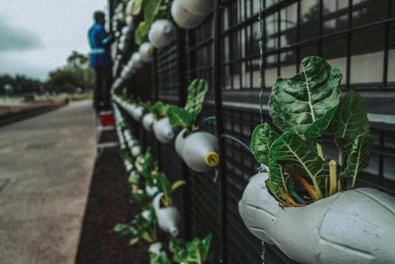What Are Resiliency Gardens? And How It Is helping People During Lockdown