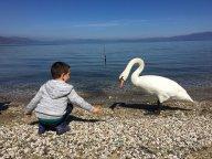 Gjergj, my son, feeding the swan