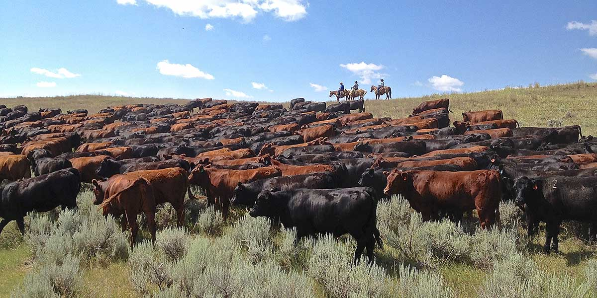 Ranching The Northern Great Plains Holistic Planned