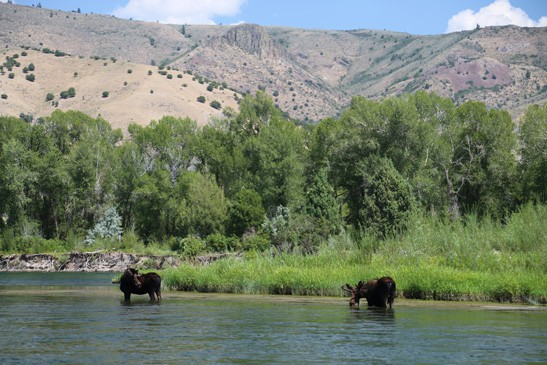 August Fly Fishing In Montana Mirr Ranch Group