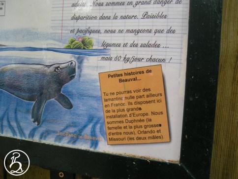 Lamantins du Zoo de Beauval