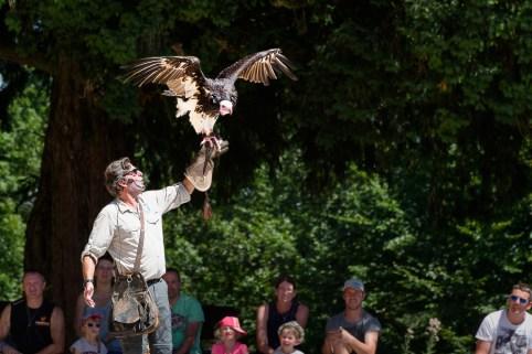 Volerie des aigles spectacle