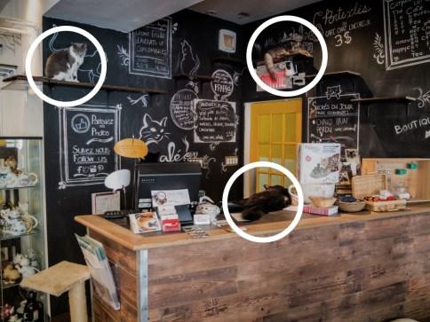 Montréal Café chat l'heureux