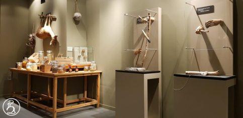 Préhistomuseum Liège