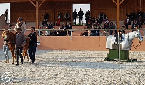 Hippolib et cheval mécanique