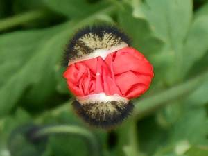 Flower WakeUp