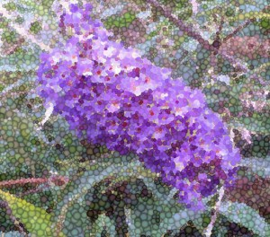 1 Picture 1 Word Lilas Mosaic