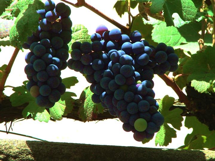 Mix grape