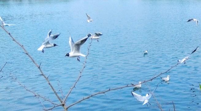 Birds ballet