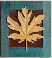 Big Leaf Maple 6