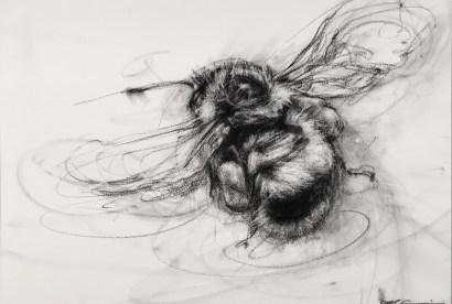 Bumblebee2AprilCoppini