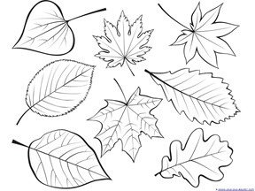 fall leaves coloring page # 3