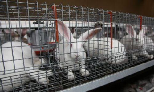 Промышленные клетки для кроликов: размеры (фото и видео ...