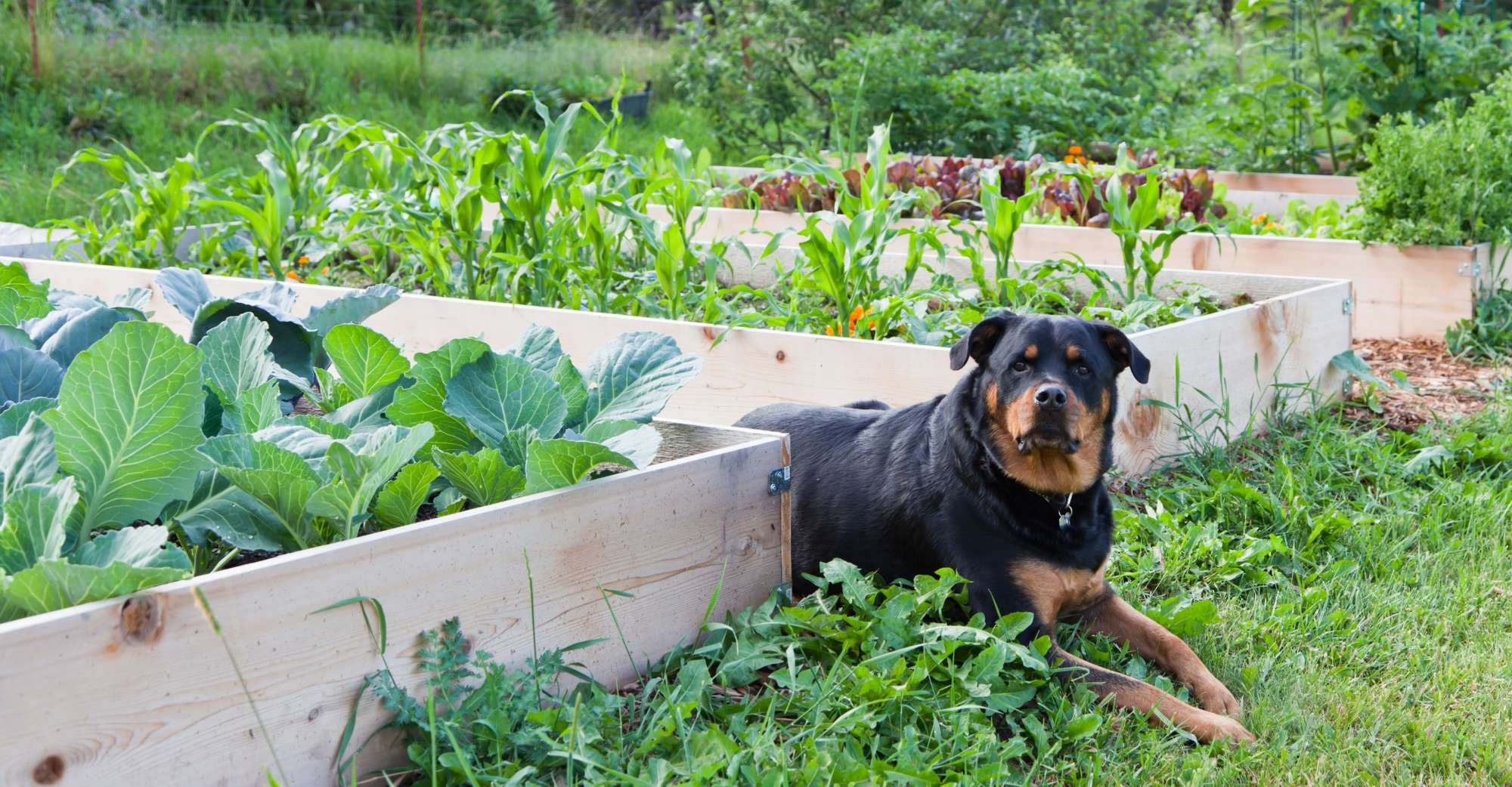 Five Plants For Your Yard And Garden That Your Dog Will