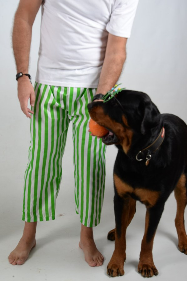 Green and White Stripes Jammies Dog 4