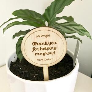 Teacher plant