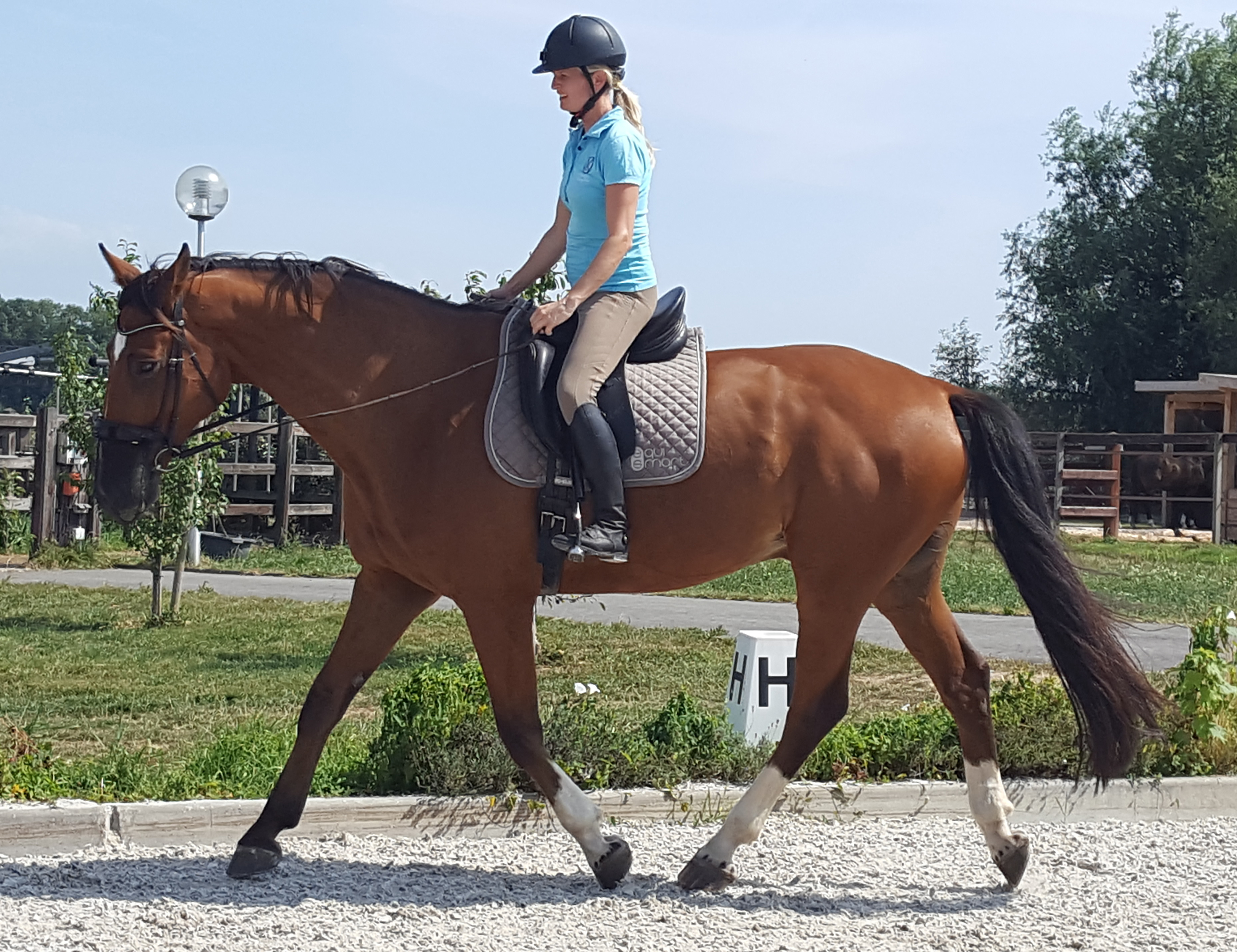 The Equine Neck As An Indicator Of Good (Or Bad) Training