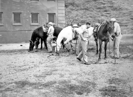 """George Smith with Maude (white) at Lualualei. """"They had this stable but there were only about six stalls in there, so they had this corral. When we were going on at 4 o'clock in the morning, you had to chase your horse down, get that sucker! And they were rolling, this was sand, then you had to clean 'em off. But anyway, it was fun."""""""