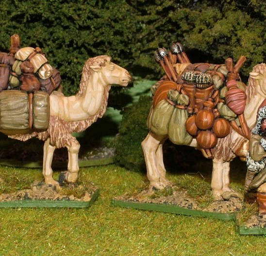 MO11 Pack Camels