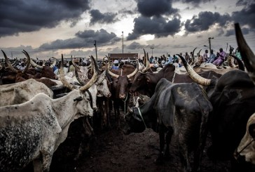 RUGA Settlements: Things you should know about scheme