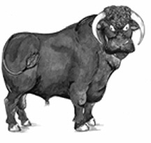 This is an example of a Black bull from Wales