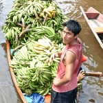 Busy banana man in an Amazonian village.