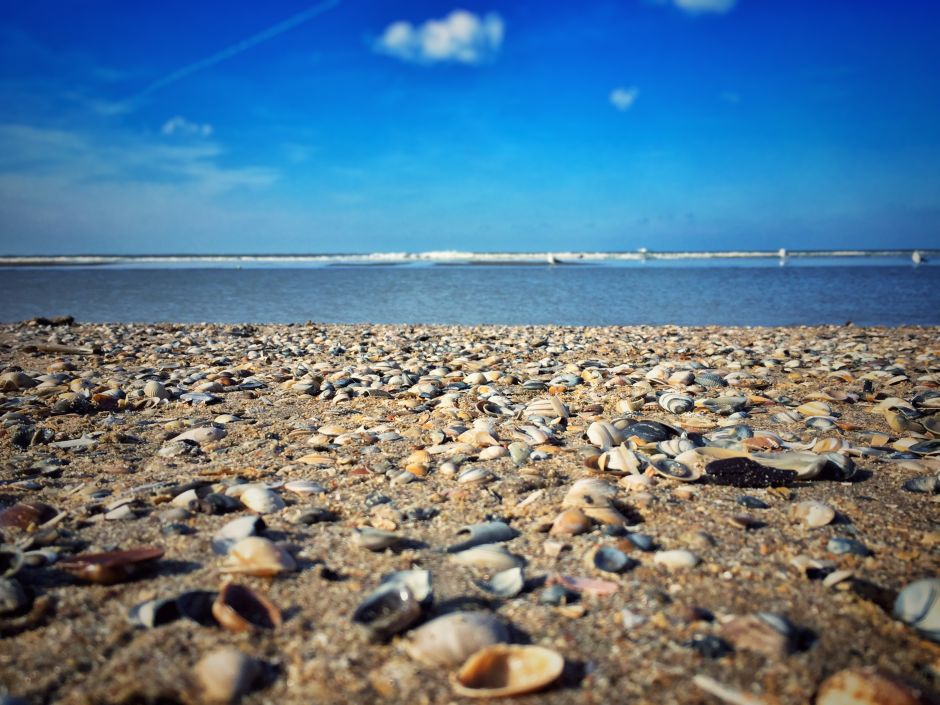 Zandvoort Muscheln