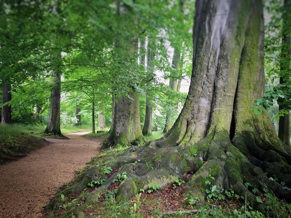 Kloster Altzella Englischer Garten