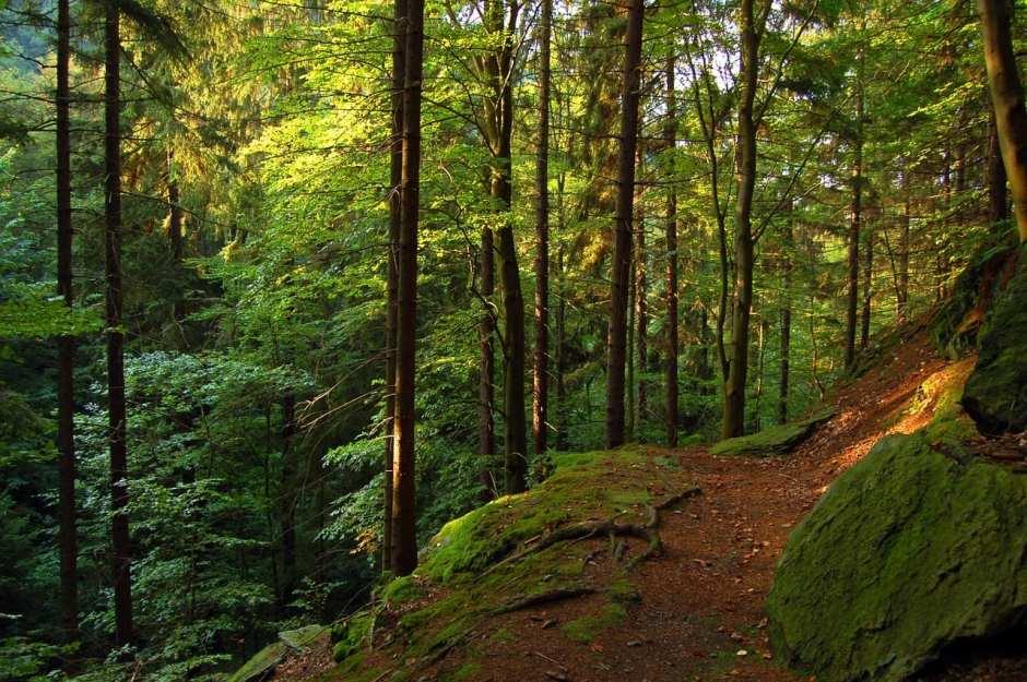 Wer möchte da nicht sofort die Wanderschuhe anziehen? Der Thüringer Wald lockt mit verwunschenen Landschaften.