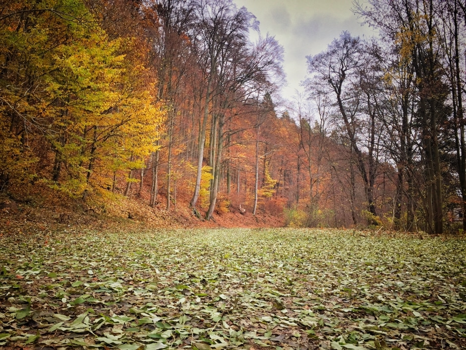Wandern Südharz Ilfeld