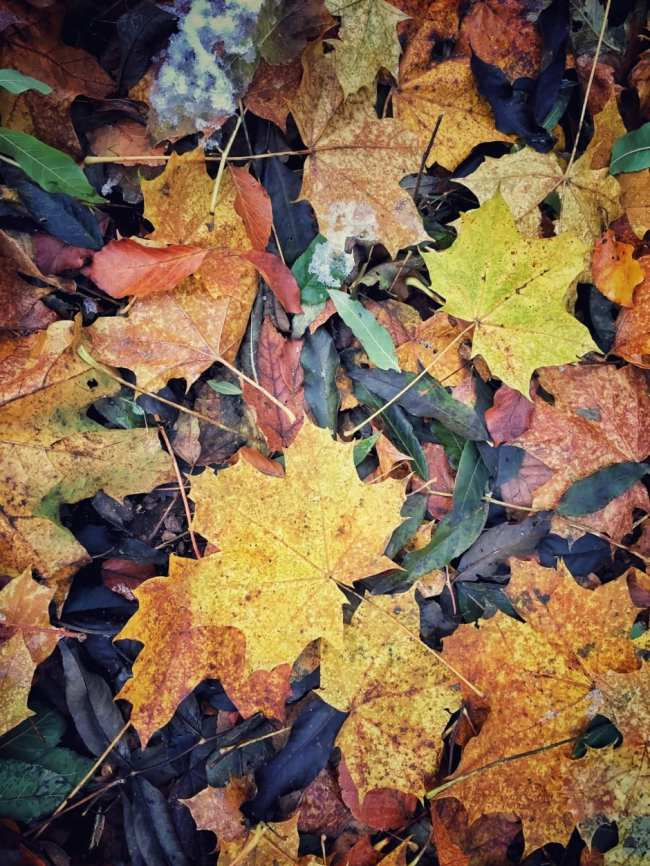 Wandern Südharz Herbst