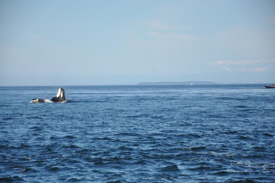 Whale Watching Kanada