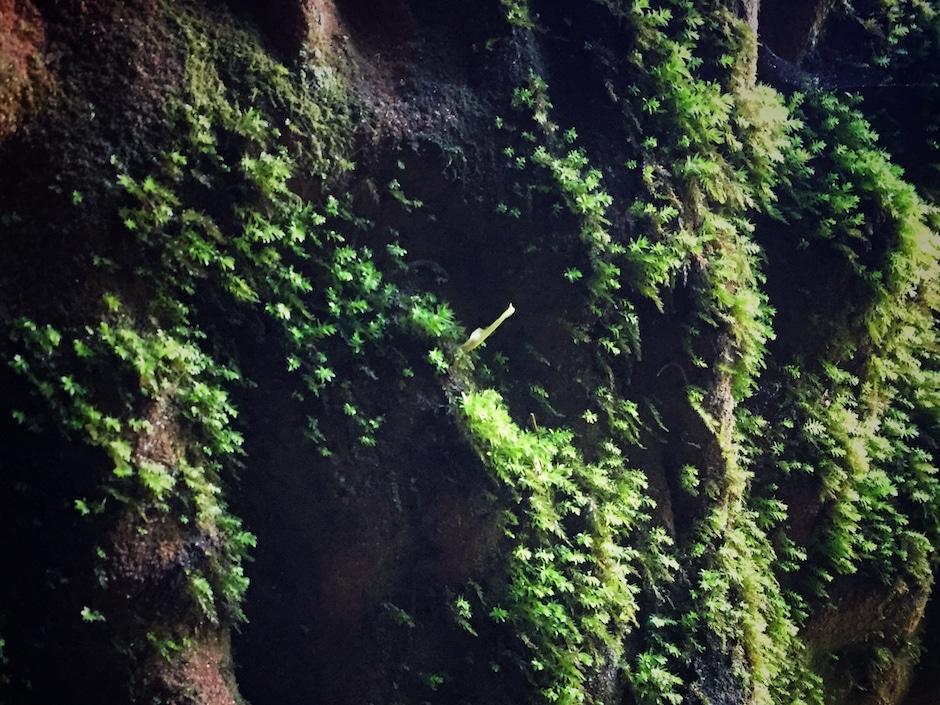 Gauja Nationalpark