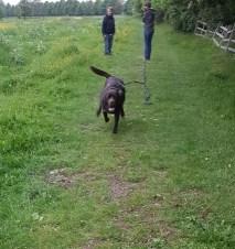Rosco rushing back for recall practice