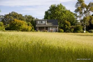 kaimi-house