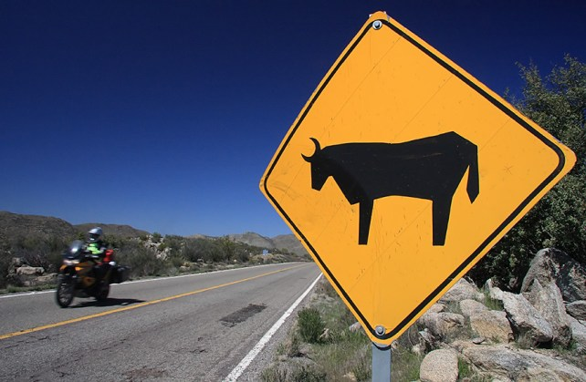 Warnings of Dark Night, Dark Cow