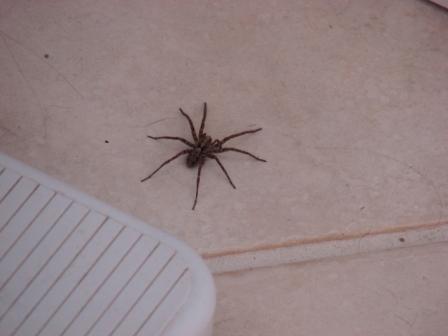 spider-076.jpg