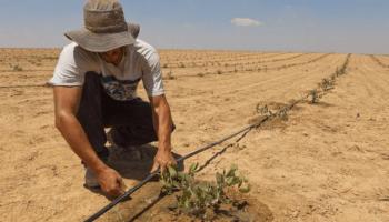 Resultado de imagen para agricultura en el desierto de israel