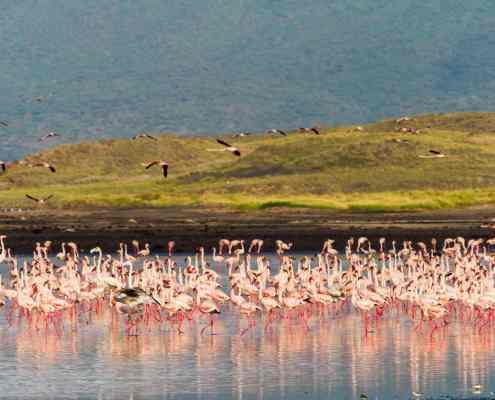 Flamingos bei Lake Natron