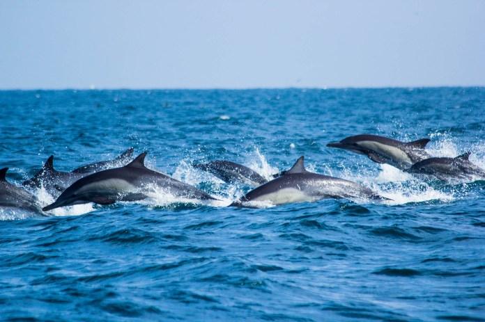 Resultado de imagen para lanzan temporada avistamiento de ballenas los organos