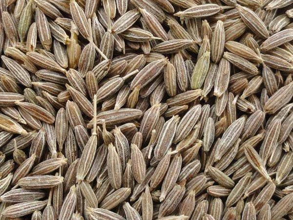 Image result for cumin seeds images