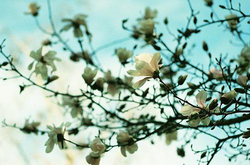 { spring back }